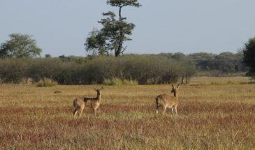 Nanzhila Plains
